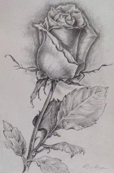 Beautiful Flower Drawings, Pencil Drawings Of Flowers, Realistic Pencil Drawings, Flower Sketches, Dark Art Drawings, Tattoo Design Drawings, Art Drawings Sketches Simple, Pencil Art Drawings, Animal Drawings