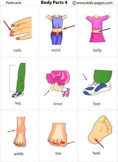 Forum   ________ Learn English   Fluent LandVocabulary: Body Parts   Fluent Land