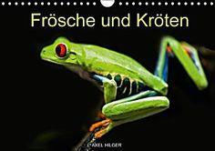 Frösche und Kröten (Wandkalender 2015 DIN A4 quer)