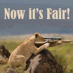 Lioness with a big game rifle - Now it's Fair!