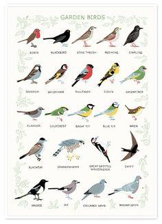Garden birds - feeds and feeders from www.gatleys.co.uk