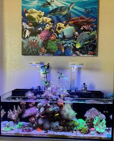 Plants above the water line and a reef you don't want to miss! | REEF2REEF Saltwater and Reef Aquarium Forum