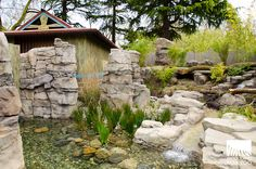 Woodland Park Zoo Blog - ASCO with biofiltration in exhibit