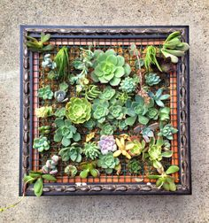 This looks like a good project! Succulent Wall Art