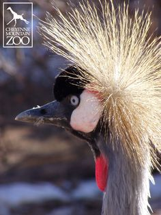 Did you know the East African crowned crane has a mating dance ritual, which consists of head-bobbing, wing fluttering, leaps and bows?
