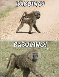 Imagem e Frases Facebook: Babuino ou Babuvino?