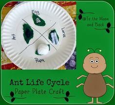 a study on ant life Observe ant behavior like tunnel and chamber making, and see different ant jobs like feeder ants that gather food and worker ants that dig study ants' life in a safe and secure habitat.