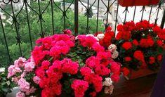 Front Gardens, Community Gardening, Organic Vegetable Garden, Plants, Garden, Garden Junk, Beautiful Flowers, Flowers, Outdoor Plants