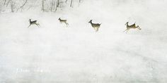 The Four Spirits of the Hollow by jamie heiden, via Flickr