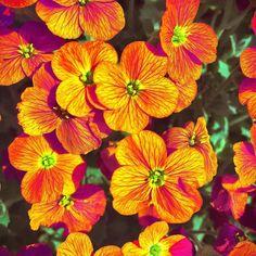 #flowers #flower #petal #petals #nature #beautiful #love #pretty #plants #blossom #sopretty #spring #summer #flowerstagram #flowersofinstagram #flowerstyles_gf #flowerslovers #flowerporn #botanical #floral #florals #insta_pick_blossom #flowermagic #instablooms #bloom #blooms #botanical #floweroftheday#blumen
