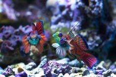 Marine+Fish+-+