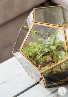 I am obsessed with this and I WILL have it.  http://gifts.redenvelope.com/gifts/polygon-glass-terrarium-30116123?ref=redsclbloggermichael&q=terrarium&viewpos=1&trackingpgroup=productsearch