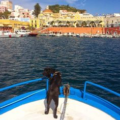 5 things to do in Ponza