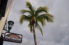 Tony Saccos Coal Oven Pizza in Estero, FL