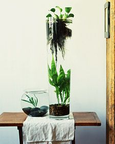 Like the look of a water garden but don't want to dig a hole in the yard? Well here's your answer. Like the look of a water garden but don't want to dig a hole in the yard? Well here's your answer. Indoor Water Garden, Garden Plants, Indoor Plants, Water Gardens, Dream Garden, Home And Garden, Garden Modern, Martha Stewart Home, Decoration Plante