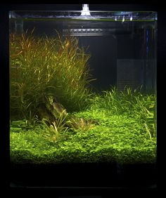 https://flic.kr/p/9fFL29 | Nano 14 | Nano contestants at the Art of the Planted Aquarium, Hannover 2011