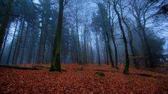 Noite na floresta do outono.