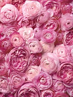 Simply lovely texture textures flowers, pink и floral Amazing Flowers, Beautiful Roses, Pink Flowers, Beautiful Flowers, Flower Aesthetic, Pink Aesthetic, Texture Photography, No Rain, Pink Peonies