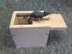 Make your own Mouse Scare Box, or Spider Scare Box! (Prank Box) Complete DIY Scare Box Plans show you how to build the ultimate prank box. Once complete attach a Mouse, Spider or even a small rubber snake. Do you have someone around the house taking treats when they shouldn't? Leave this out on your counter tell them its the new treat box. Upon opening the mouse (or snake or spider) will hit their hand. GREAT LAUGHS! Keep your camera ready!