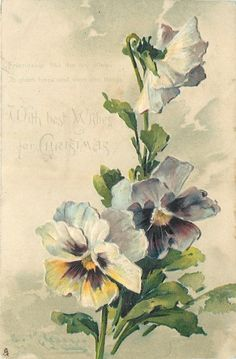 1904 Pansies postcard by Catherine Klein Catherine Klein, Art Floral, Flower Images, Flower Pictures, Flower Art, Fruit Painting, China Painting, Illustration Blume, Botanical Illustration