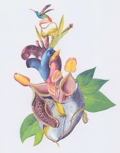 bedelgeuse:  anatomical heart collage by Travis Bedel