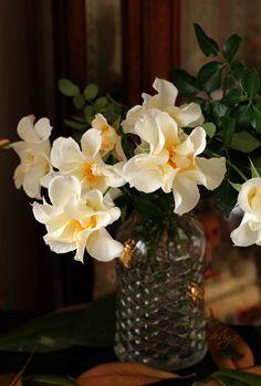 rose プリエール : La Fleur