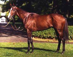 1990 Kentucky Derby winner Unbridled