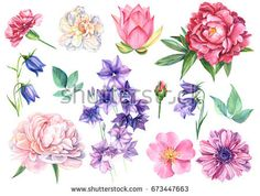 Set Flowers of bells, lotus, dog rose, White Rose, Carnations, peony and anemone watercolor, hand drawing
