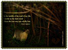 Cat Wisdom 101 Cat Wisdom 101 - Welcome To enlighten & entertain cat lovers everywhere