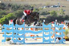 Qrack de la Love Autumn Cup - Masters Tour #equestrian #horse #horses #horsejump #competition #equine #chile #equitacion #horserider #showjumping #mijas #españa #spain #costadelsol #equestriantour #autumncup