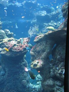 aquariums with coral reef - want to have the wall painted this way