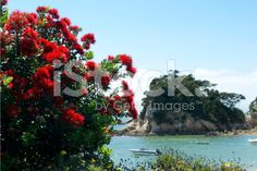 New Zealand Pohutukawa and Seascape royalty-free stock photo Christmas Time, Christmas Wreaths, Image Now, Summer Days, New Zealand, Royalty Free Stock Photos, Bloom, Holiday Decor, Flowers