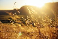 Golden hour Golden Hour Calculator, Outdoor Photography, Nature Photography, Sylvie Germain, Pillars Of Eternity, Fields Of Gold, Gold Aesthetic, All Nature, Aesthetic Wallpapers