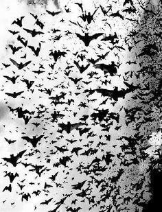 whole lotta bats!