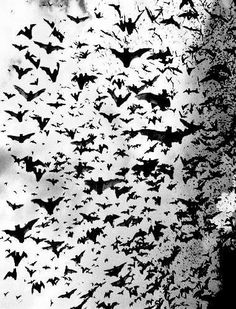 overwhelming bat swam with perfect silhouettes