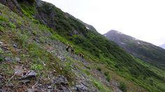 Expedition Alaska: Race Day 2 - Glaciers, trekking & handtrams @Expedition_AK