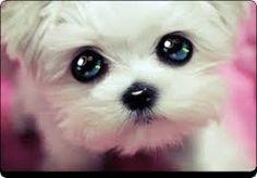 Risultati immagini per animali con occhioni dolci