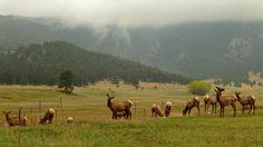 Impression Evergreen: Elk Meadow, Colorado