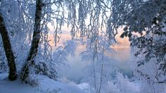background winter scene 2560x1440