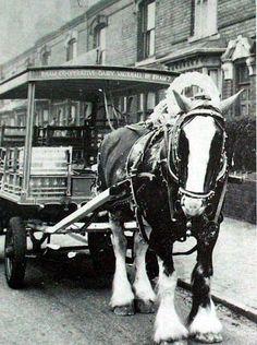 the old milkmen of brum London History, British History, Vintage Photographs, Vintage Photos, Electric Bike Kits, Pony Breeds, Wales, Nostalgic Images, Victorian Life