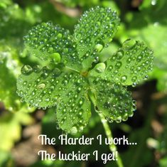 The harder I work, the luckier I get! See more motivational quotes on Always The Holidays.
