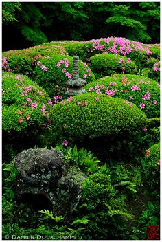 Lush vegetation and blooming rhododendrons surrounding miniature stone pagoda, Shisen-do temple gardens