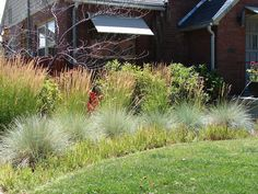 New Utah Gardener: Blue Oat Grass, karl forester grass and Japanese blood grass