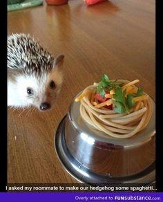 spaghetti hedgehog