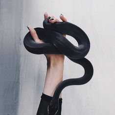 Dark themed series of black animals curated by Blvck Paris. Pretty Snakes, Beautiful Snakes, Les Reptiles, Cute Reptiles, Colorful Animals, Black Animals, Mexican Black Kingsnake, Cute Snake, Cute Animal Pictures