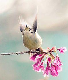 The Beauty of Bird Photography by John & Fish Taiwan Yuhina takes to the sky