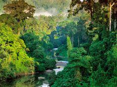 Forêt tropicale // Rainforest