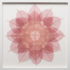 "mherynowski: "" Miya Ando Rose Mini Mandala, 2016 Dyed Bodhi skeleton leaves and monofilament on archival ragboard 21 × 21 in (53.3 × 53.3 cm) Miya Ando is an American artist whose metal canvases and sculpture articulate themes of perception and ones..."
