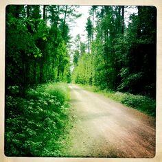 Waldweg nahe dem Altmühlsee