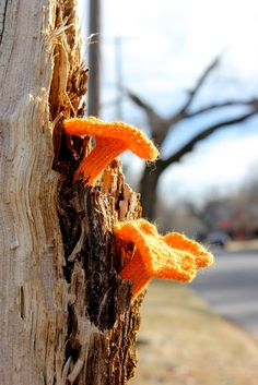 knitted fungi in their natural habitat